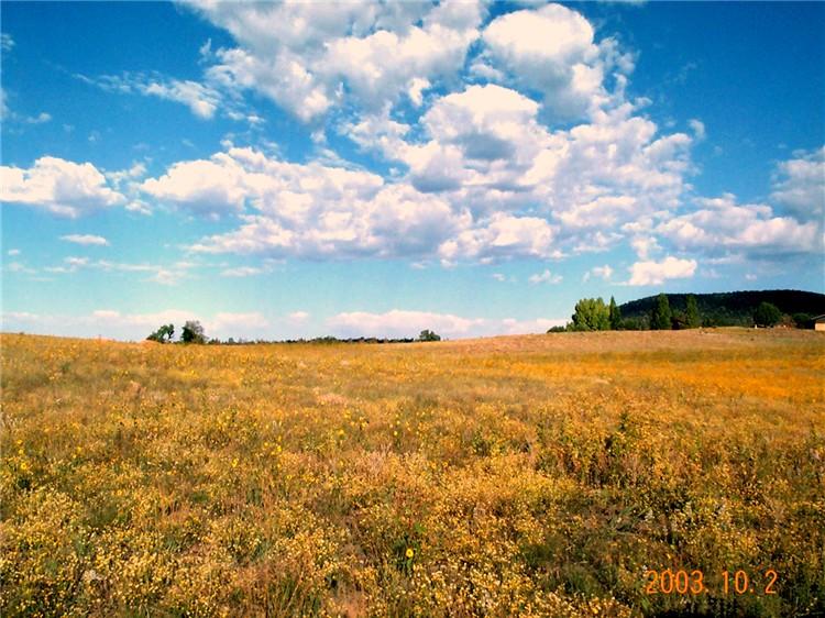 meadowview.jpg